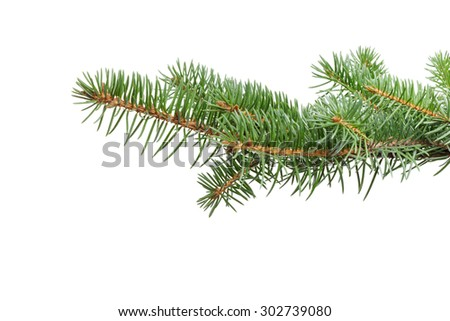 green fir twig for hanging something isolated on a white background - stock photo