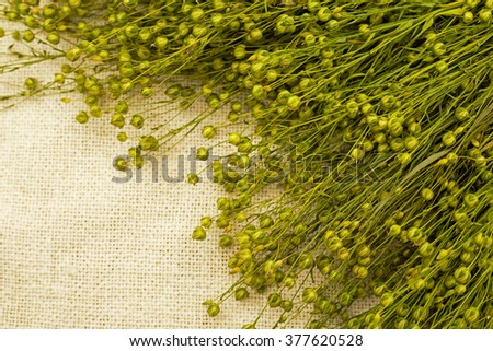 Green flax on the natural linen fabric  background  - stock photo