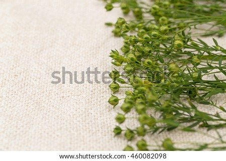 Green  flax twigs with linseed on the natural linen fabric background - stock photo