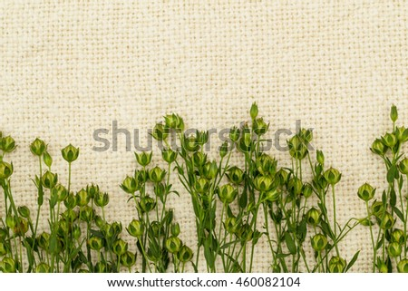 Green  flax twigs with linseed on the natural linen fabric background, close up - stock photo