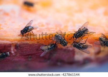 how to make fruit flies go away