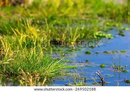green flooded field - stock photo