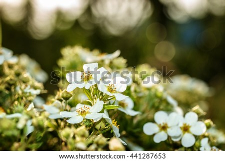 Green floral background outdoors in summer