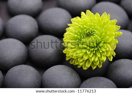 green flower bloom background stone detail - stock photo