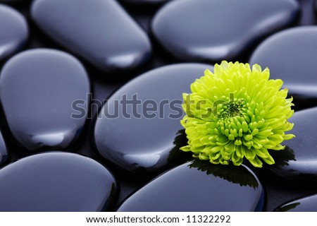 green flower detail still-life spa stone - stock photo