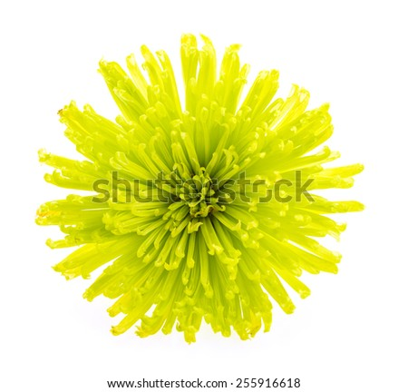 Green flower isolated on white background - stock photo