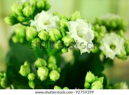 names of green flowers, Beautiful flower
