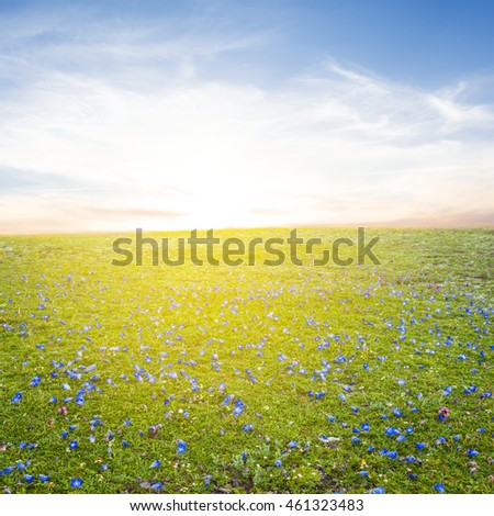 green flowered field at the sunrise