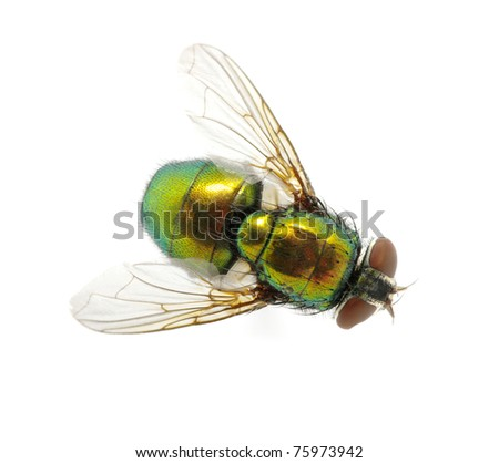 green fly - stock photo