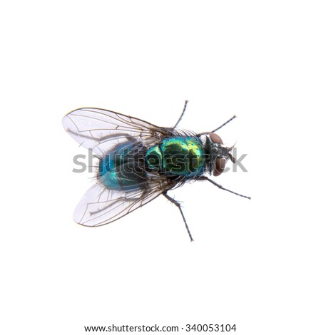 Green fly isolated on a black background - stock photo