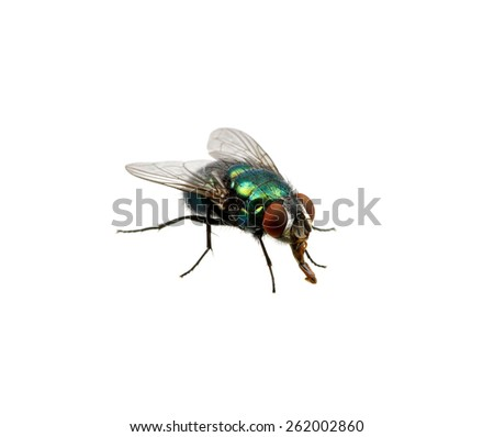 green fly isolated on white - stock photo