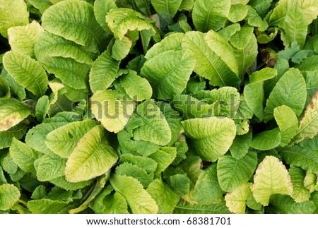 Green foliage - stock photo