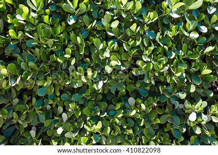 green foliage background - stock photo