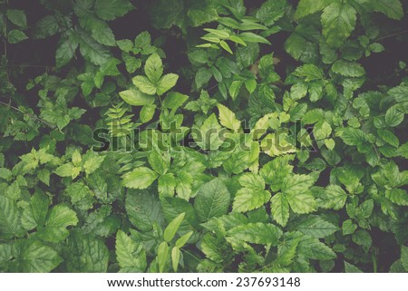 green foliage background in forest shadows - retro, vintage style look - stock photo