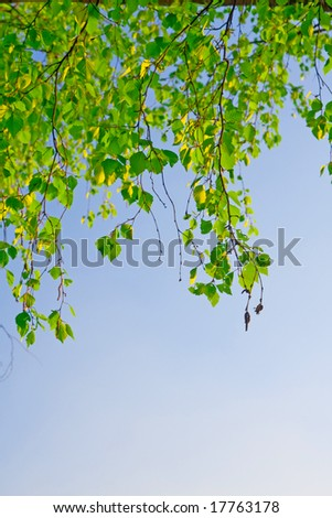 green foliage branch and blue sky