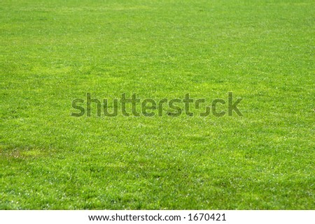 Green football grass