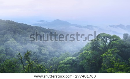 Green forest and beautiful mountain at inthanon Chiangmai Thailand as background