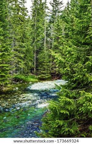 Green forest and lake in Montenegro. - stock photo