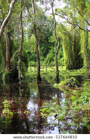 Green forest and Melaleuca trees Wetland in Rayong Thailland