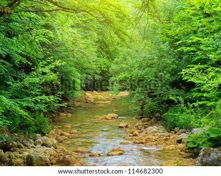 Green forest and river. Natural composition - stock photo