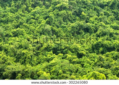 Green forest background - stock photo