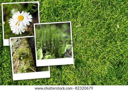 Green Forest Background and Background