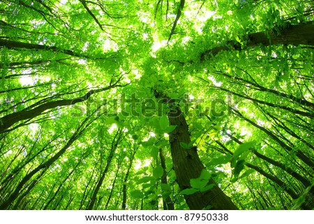 green forest background in a sunny day - stock photo