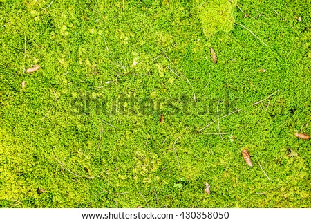 Green forest floor - moss with cone