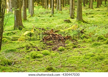 Green forest floor - moss with root