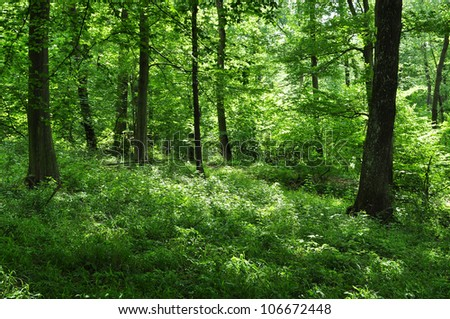 Green forest foliage, nature ecosystem.