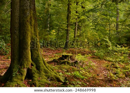 green forest in Europe - stock photo