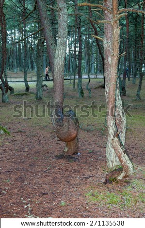 Green forest in the national park Curonian Spit. Autumn season. - stock photo