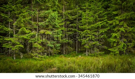 green forest in the summer day - stock photo