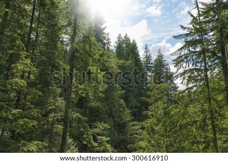 Green forest landscape  - stock photo