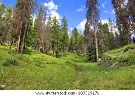 Green forest landscape of Rocky mountains in Banff National Park (Alberta, Canada) - stock photo
