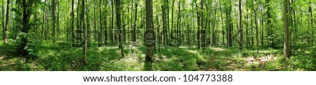Green forest landscape with trunks of trees covered with a moss - stock photo