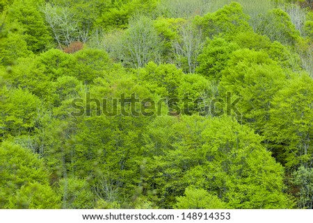 Green forest mountain