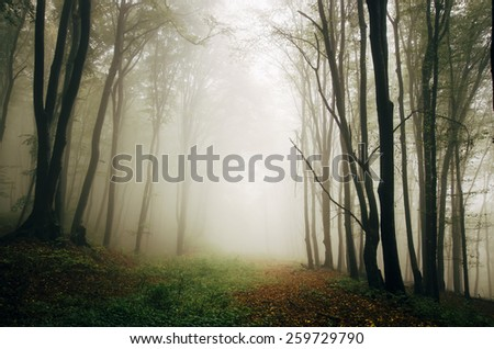 green forest natural spring landscape - stock photo