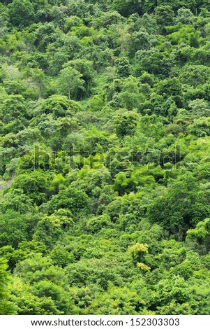 Green forest on mountain from Southern of Thailand