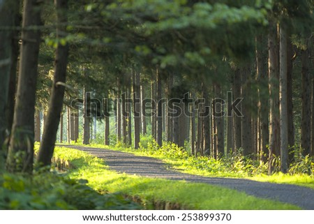 Green forest path - stock photo