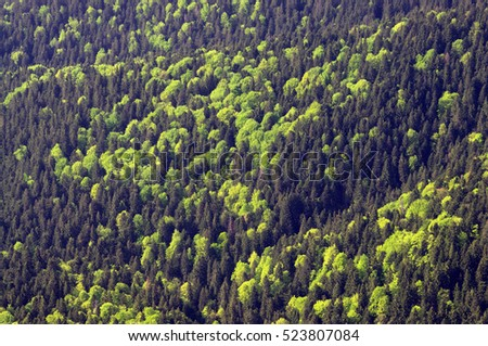 green forest seen from above