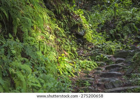green forest trail - stock photo
