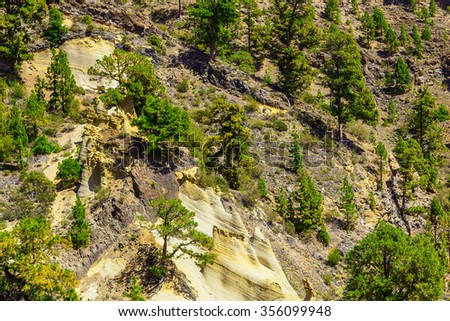 Green Forest with Fir Trees on Mounains. National Landmark named as Moon Landscape on Tenerife Canary Island in Spain