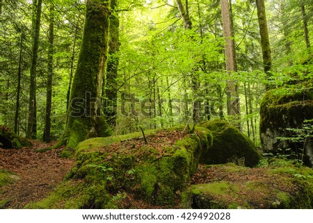 Green forest with mossed ground