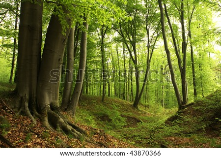 Green forest with old trees - stock photo