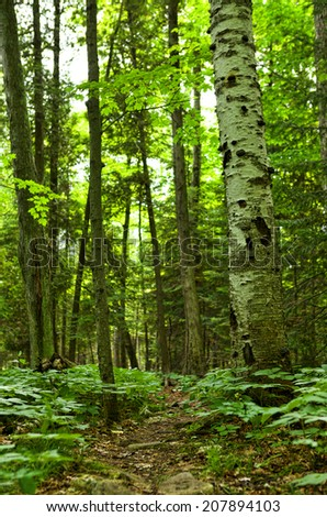 Green forest with path, vertical