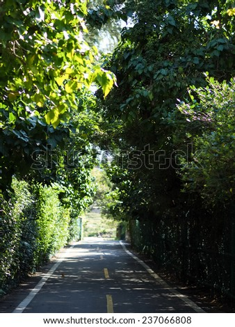 Green forest with pathway  - stock photo