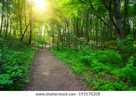 green forest with pathway and sun light between the trees - stock photo