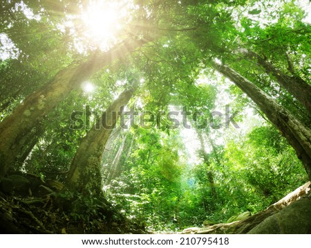 Green forest with sun ray, Rain forest in South of Thailand  - stock photo