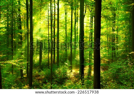 Green forest with sunbeams  - stock photo